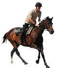 Cheval droite.png