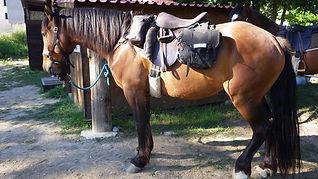 Junts,Arles sur tech, randonnées, équestres, cheval, Vallespir