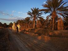 Tunisie, Douz, sahara, désert, palmerie, oasis
