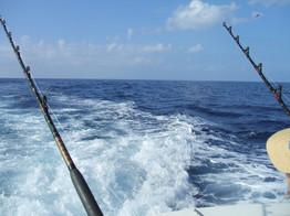 fishing-577514_1920.jpg