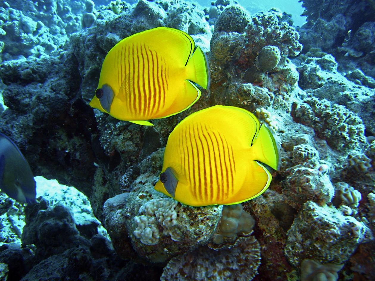 diving-1656619_1920.jpg