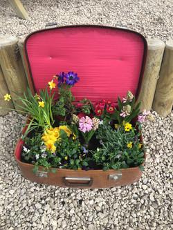 spring suitcase