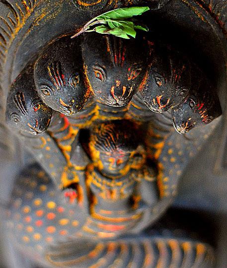 "Nakshatra 9 - Ashlesha - Jyotish, ""Ciencia de la Luz"""