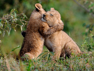 Hugs are truly essential!
