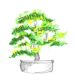 arnold arboretum001_edited_edited.jpg