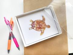 turtle cards in box.jpg