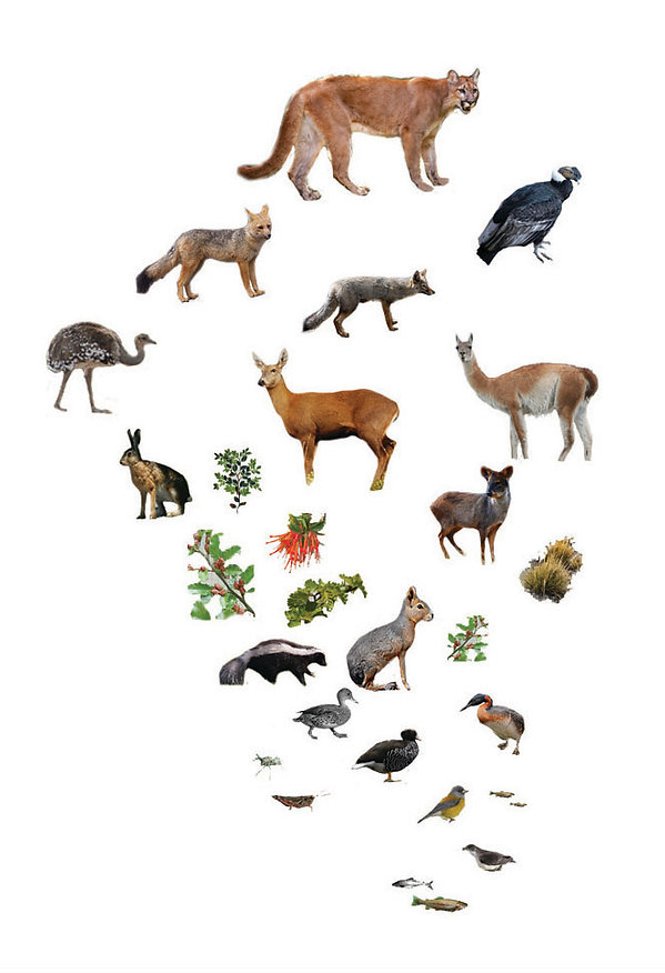 animal collage_cropped.jpg