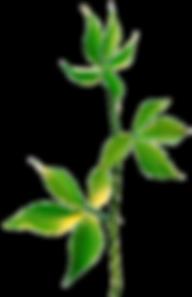 ug_PlantDesigns_83.png