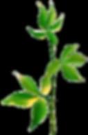 ug_PlantDesigns.png