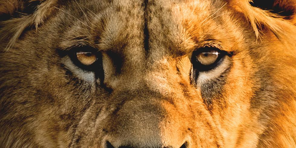 McDonald's - The Lion King