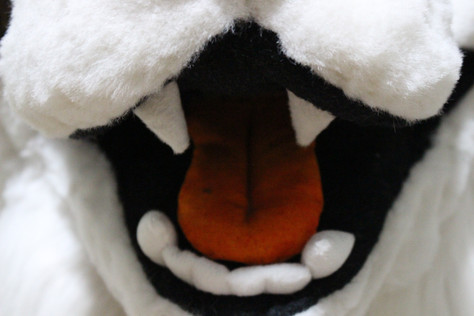 Border Collie Partial Head