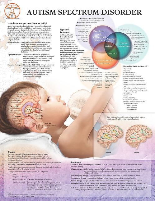 Understanding Autism - Anatomical Wall Chart