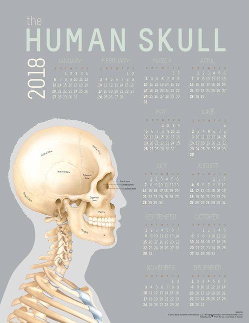 Human Skull - Wall Calendar