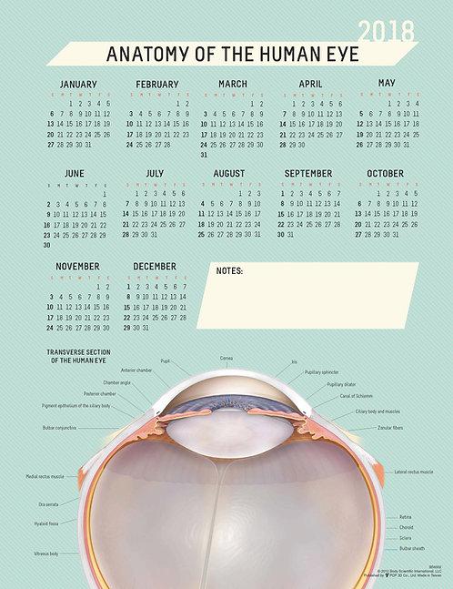 Anatomy of the Eye - Wall Calendar