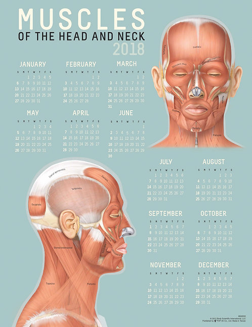 Facial Muscles - Wall Calendar