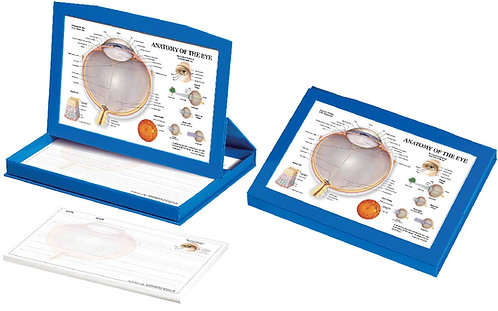 Eye Anatomy - Display Box