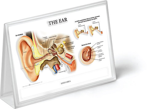 Ear, Nose & Throat - Anatomical Tent Chart