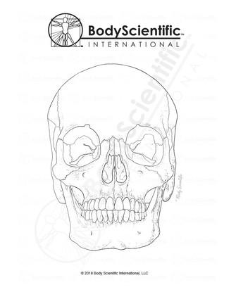 BSI_BW_Skull-Anterior.jpg