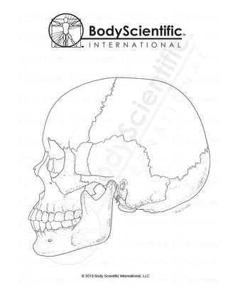BSI_BW_Skull.jpg
