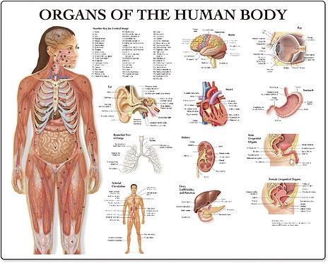 Organs of the Human Body - Desktop Mat