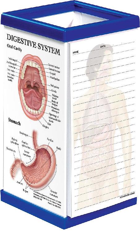 Digestive System - Pen Box