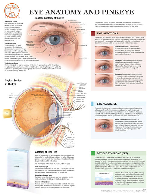 Eye Anatomy & Pink Eye - Anatomical Wall Chart