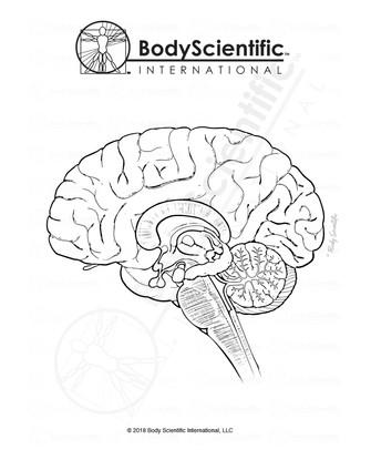 BSI_BW_Brain-Sagittal.jpg