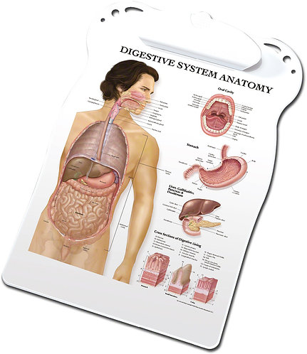 Digestive Anatomy - Clipboard