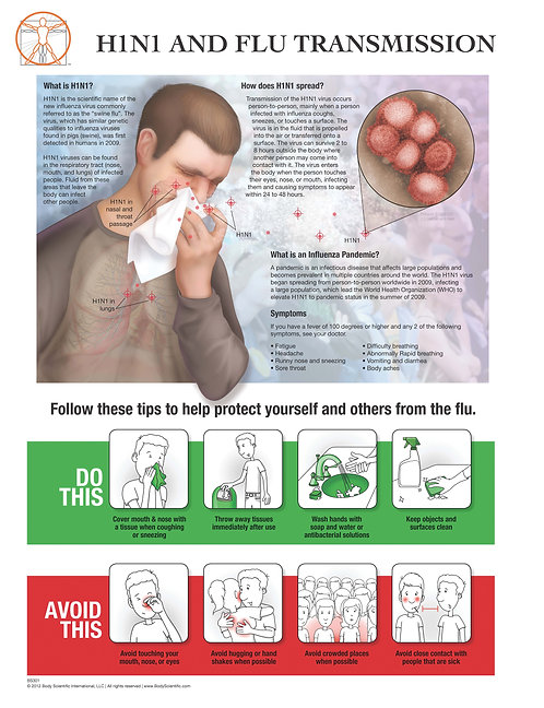 H1N1 & Flu Prevention - Anatomical Wall Chart