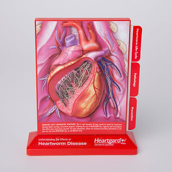 BSI_Heartworm-Model_Mrktg_002.JPG