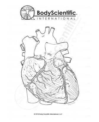 BSI_BW_Heart.jpg