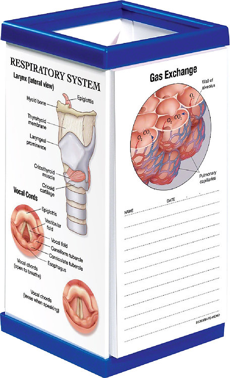 Respiratory System - Pen Box