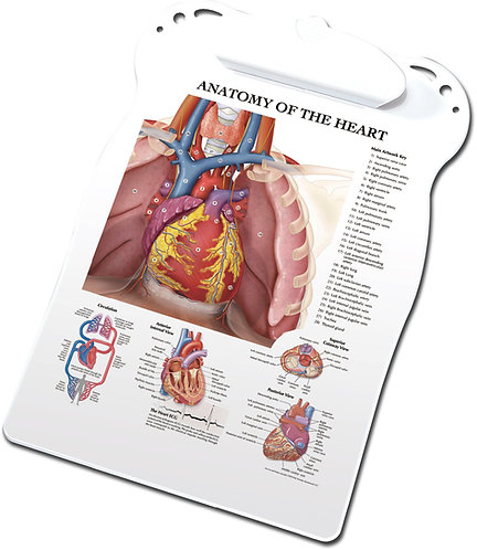 Anatomy of the Heart - Clipboard