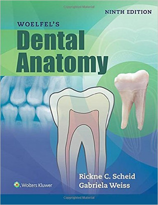 WKH-036_Woelfel's_Dental_Anatomy.jpg