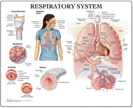 Respiratory System - Desktop Mat