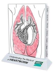 Productdevelopment_Heartworm_sketch.jpg