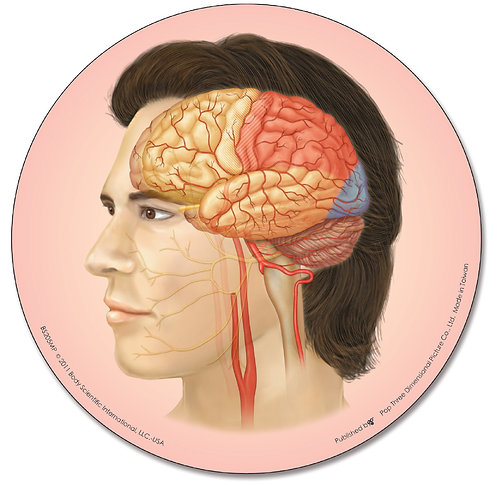 Anatomy of the Brain - Mouse Pad