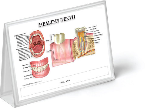 Healthy & Diseased Teeth - Anatomical Tent Chart