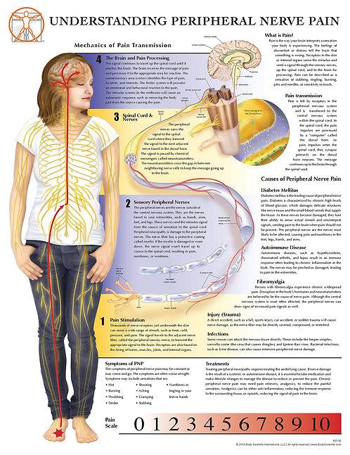 Peripheral Nerve Pain - Anatomical Wall Chart