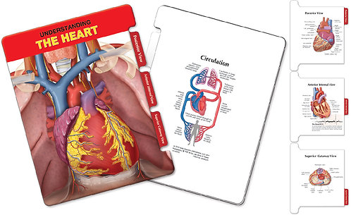 The Heart Anatomy - Slider Board