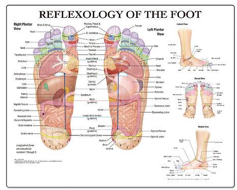 Reflexology of the Foot - Desktop Mat