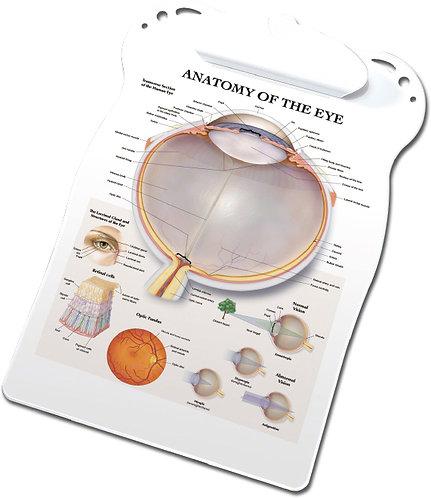 Anatomy of the Eye - Clipboard