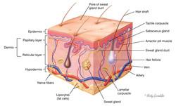 Skin Block