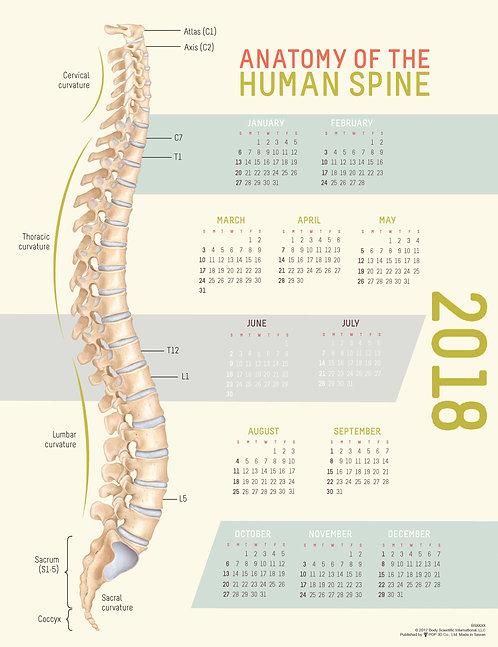 Human Spine - Wall Calendar