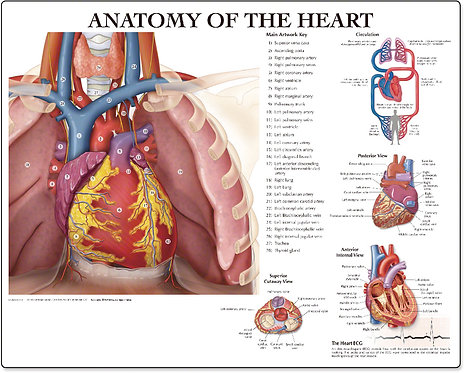 Anatomy of the Heart - Desktop Mat