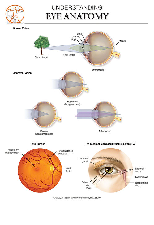 copy of Eye Anatomy - Anatomical Wall Chart