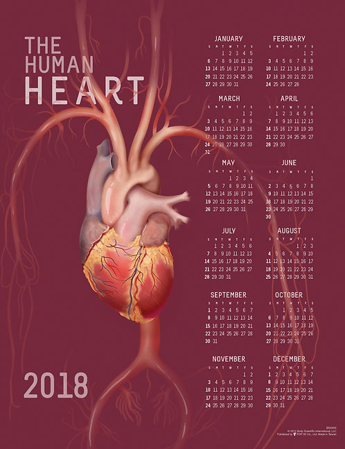 Anatomy of the Heart - Wall Calendar