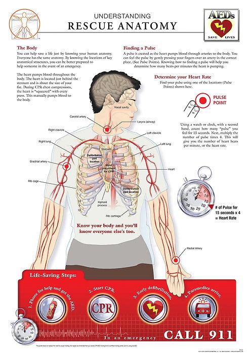 Rescue Anatomy - Anatomical Wall Chart