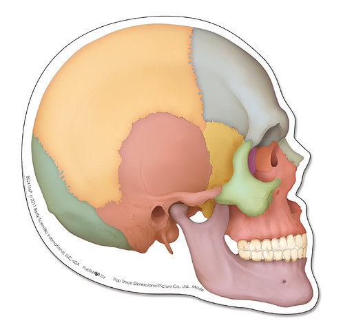 Anatomy of the Skull - Mouse Pad
