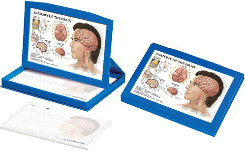Brain - Display Box